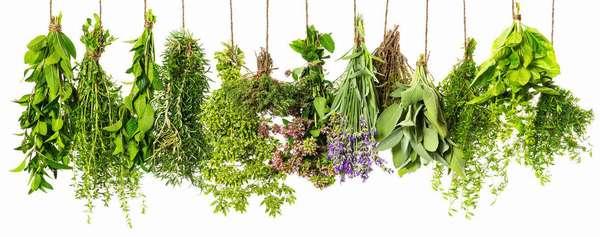Травы для нормализации обмена веществ - рецепты из лекарственных трав