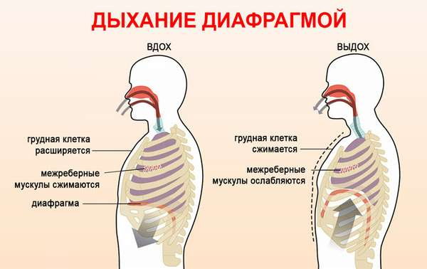 Практики дыхания. Диафрагменное дыхание