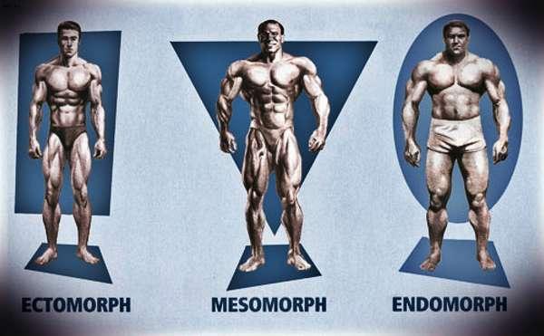 Какая тренировка соответствует Вашему типу тела?