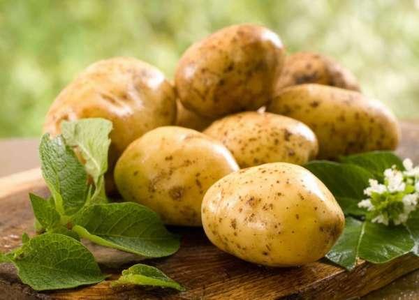 Польза и вред картофеля для здоровья человека. Фото