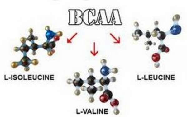 Аминокислоты с разветвленной цепью: что это такое, как принимать, польза и вред