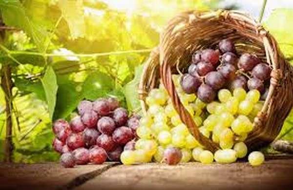 Полезен ли виноград для похудения