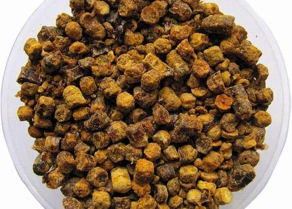 Полезные свойства и противопоказания перги пчелиной
