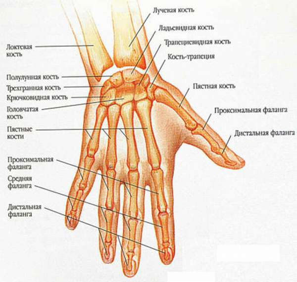 Признаки перелома в кисти руки