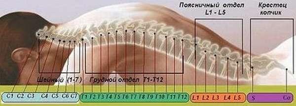 Какие осложнения бывают после перелома позвоночника