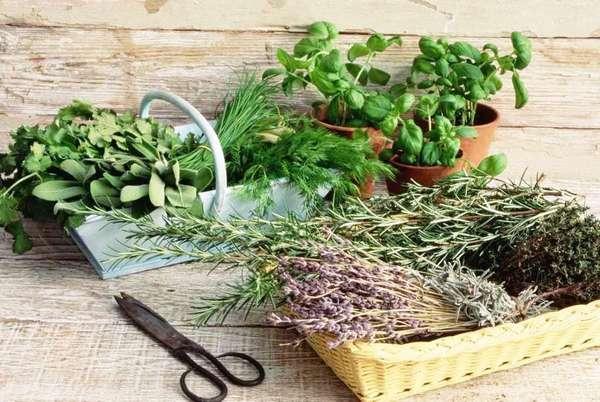 Как уменьшить аппетит народными средствами - травы