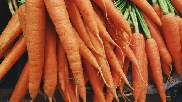 Морковка: оранжевое чудо с грядки