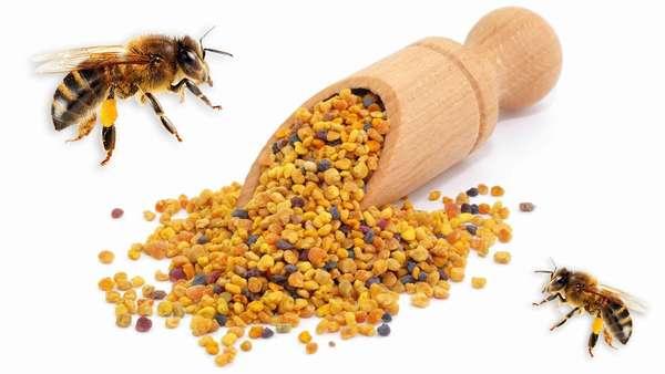 Полезные свойства пыльцы пчелиной Фото
