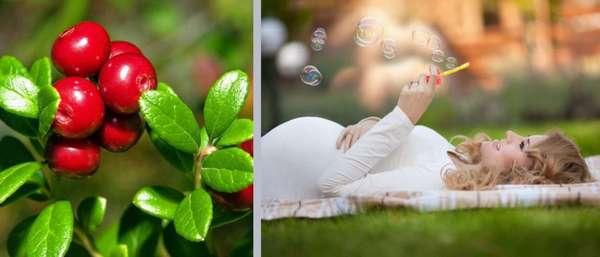 Ягоды при беременности Фото