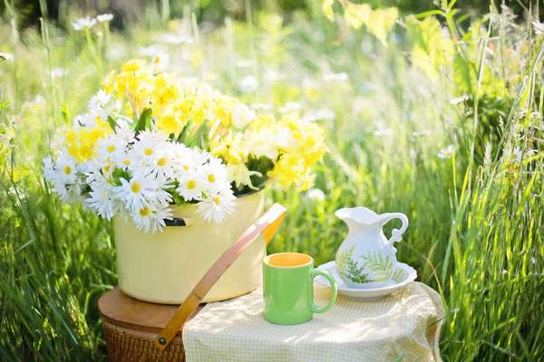 Ромашки к чаю Фото