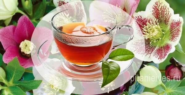 Чай - Как принимать морозник для похудения