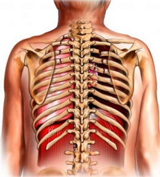 Трещина в ребрах: симптомы и лечение в домашних условиях, сколько заживает и что делать, определить трещину в грудной клетке