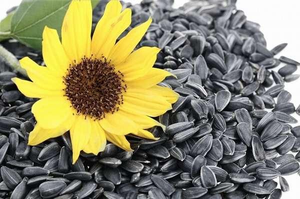 Химический состав семян подсолнечника