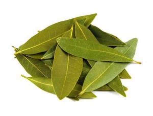 Листья лаврушки