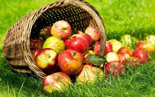 Рассыпанные яблоки фото